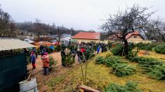 Nakupování vánočních stromků 13. 12. 2020